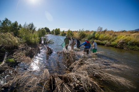 Pima County Santa Cruz River Fish Survey