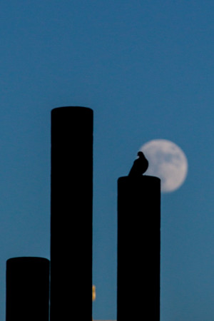 File: bird and moon