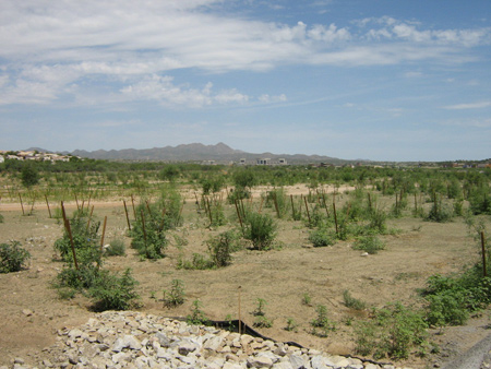 Project site in 2009, following hydroseed application