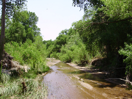 Riparian Habitat along Cienega Creek