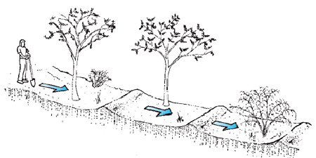 Water harvesting example #4