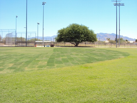 Arthur Pack Park soccer fields