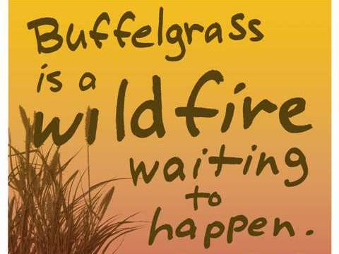 Beat Back Buffelgrass Day