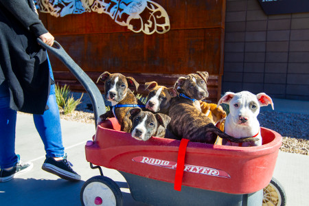 dogs in a wagon