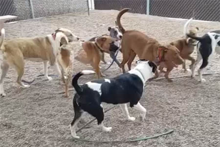 dogs in a play group