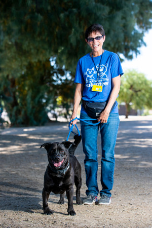 volunteer walking a dog
